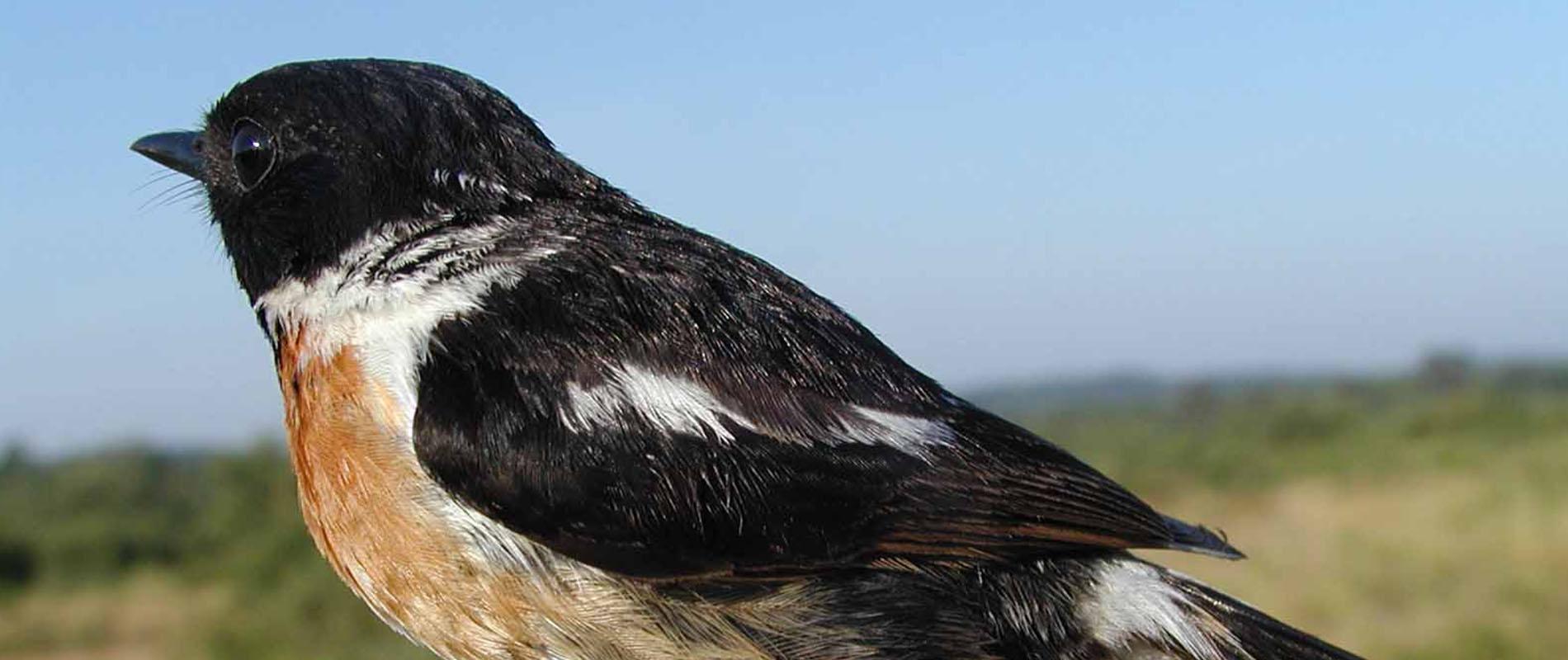 Photographie d'un oiseau